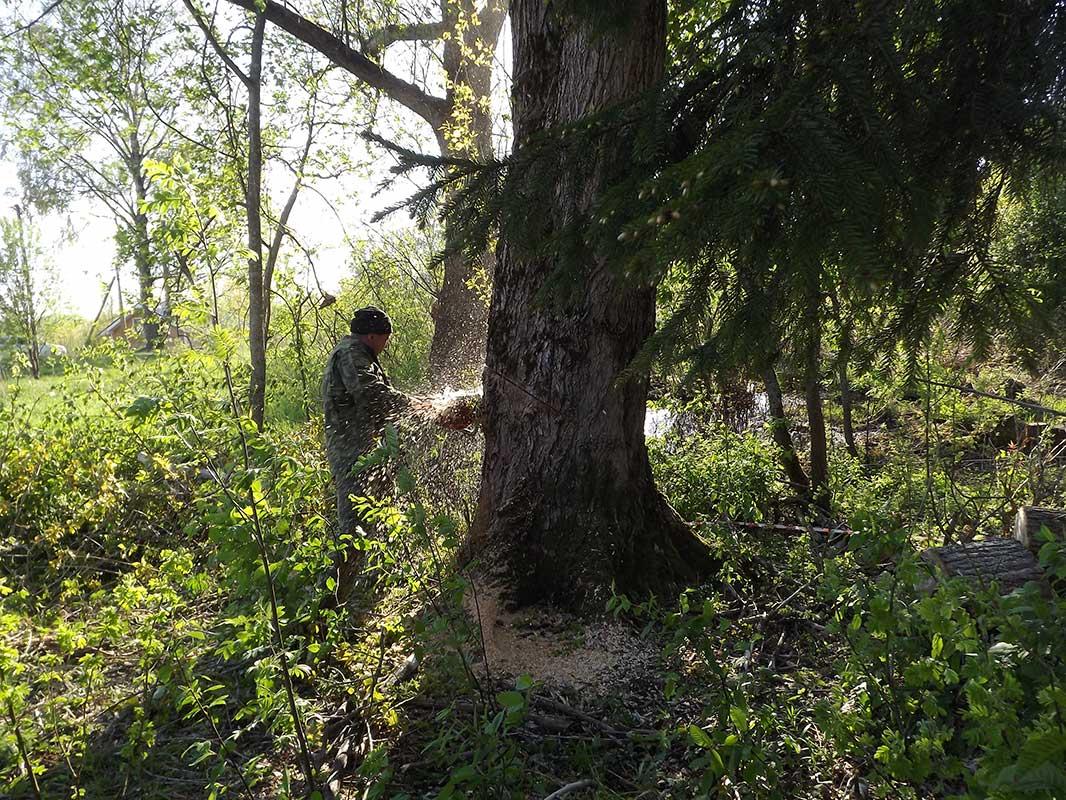 Спил деревьев на участке